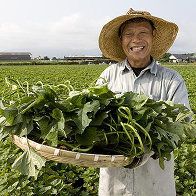 ケールも大麦若葉も超えた、鹿児島だけの幻の野菜。