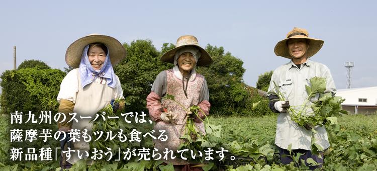 南九州のスーパーでは、薩摩芋の葉もツルも食べる新品種「すいおう」が売られています。