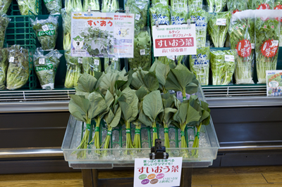 野菜売り場の一角に並ぶ「すいおう」