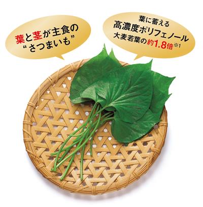 ケールや大麦若葉を凌駕する「すいおう」の栄養成分