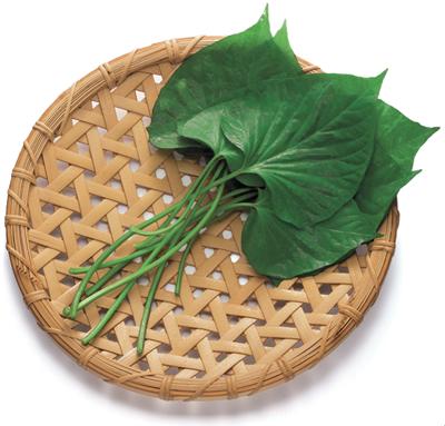 鹿児島で出会った宝の野菜「すいおう」