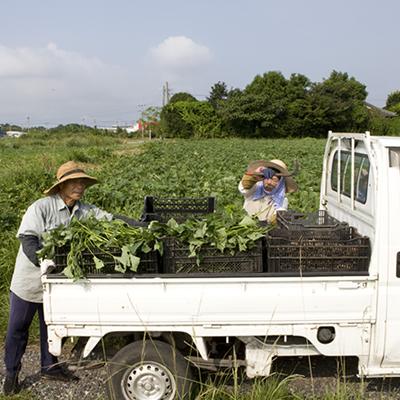 農薬を一切使わない栽培法
